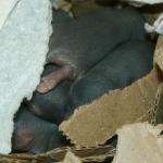 tas de ratons J4