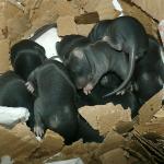 tas de ratons J8